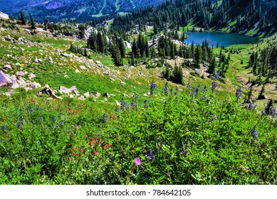Lake Catherine nestles in the mountain pass between the Albion Basin and Big Cottonwood Canyons in Utah. Wildflowers are spectacular in the early summer.