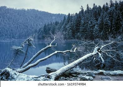Lake Cerne jezero in Sumava mountains/Bohemian forest - Shutterstock ID 1619374984