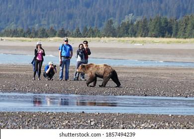 Lake Clark National Park, Alaska - July 18, 2020: tourists photographing coastal brown bear along the beach