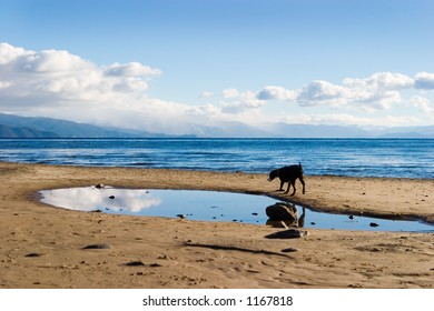 Lake with clouds, reflection and beach and wandering dog