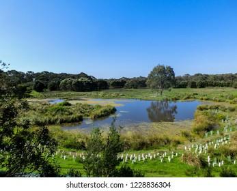 Lake in a Coala Park, Philip Island, Victoria, Australia