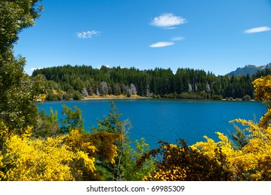 lake in colorful forest