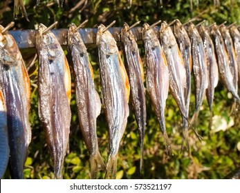 Lake Como, Italy: Typical fish named misultin dried in the sun