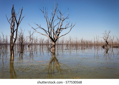 Lake with dead trees.