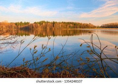 a lake in the forest