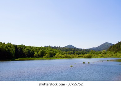 Lake and forest during bright day