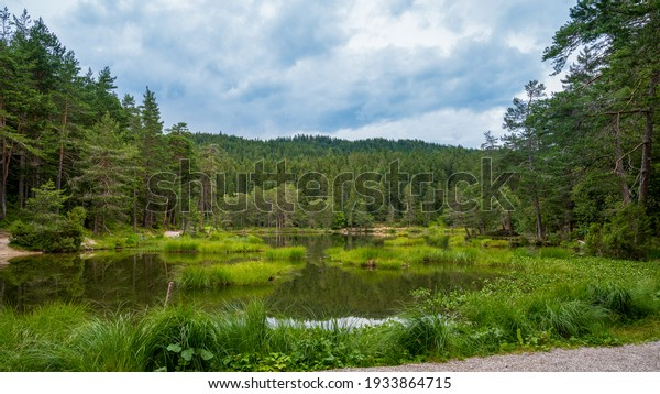 lake in the forest Möserer See Austria