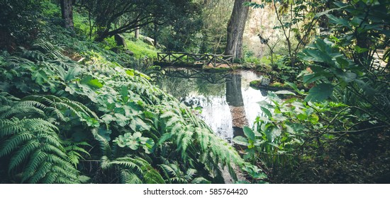 Lake Forest Surrounded By Vegetation Monserrate Stock Photo (Royalty ...