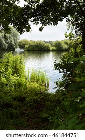 Lake framed by trees on a shady bank, bog plants grow in the sun at the edge of the water