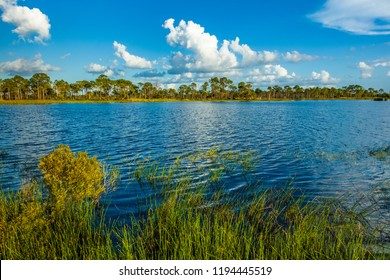 Lake in Fred C. Babcock/Cecil M. Webb Wildlife Management Area in Punta Gorda Florida