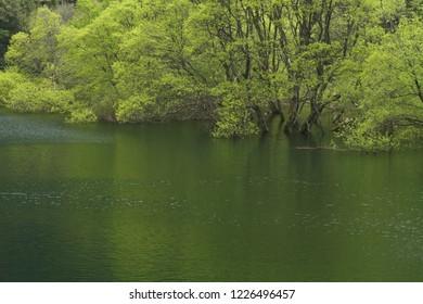 Lake of fresh green