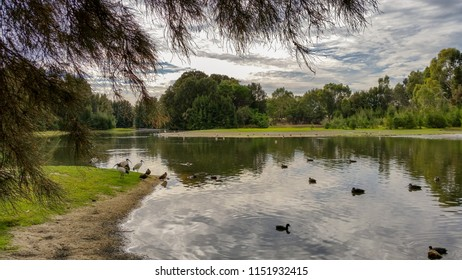 Lake with geese, ducks, ibis and other waterbirds