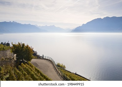 Lake of geneva vineyard