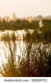 lake with grasses
