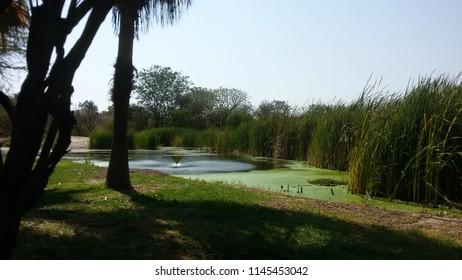lake and grasss