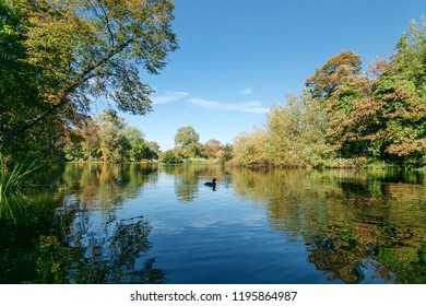 Lake in Green forest
