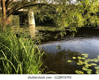 Lake in the green nature