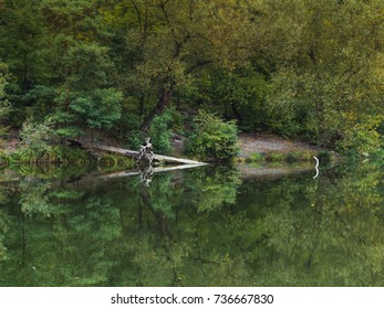 Lake with green water reflecting trees. Reflection in the water of fallen tree and creeping rootstock.