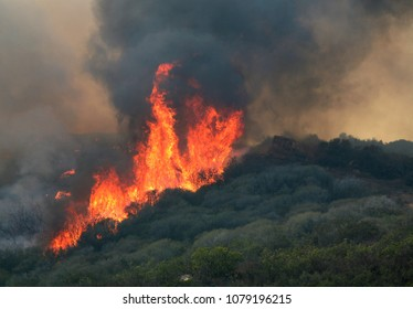 Lake Hodges, CA/USA - Oct 23, 2007: Flames burn a forest during the Harris Ranch Fire as it threatens homes around Lake Hodges, California.