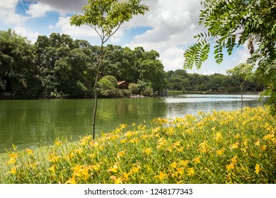 Lake of Ibirapuera Park, Sao Paulo, Brazil.