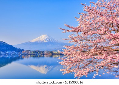 Lake Kawaguchiko, where Mt. Fuji and cherry blossoms bloom, is a typical landscape of spring in Japan.