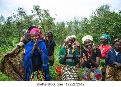 Lake Kiva, Rwanda - May 2017: Widows of the genocide now growing coffee to support themsleves