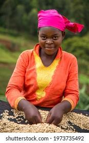 Lake Kivu, Rwanda - May 2016 Coffee farmers sorting through red coffee cherries in the coffee cooperatives throughout the Lake Kiva region of Rwanda