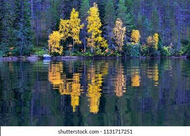 Lake Kuusamo in Finland in autumn with yellow birches at dusk.