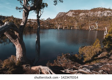 Lake Lilla scenery along the hiking trail with tree as foreground in Cradle Mountain - Lake St Clair National Park, Tasmania, Australia.