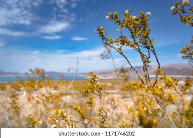 Lake Mead National Recreation area near Boulder City, Arizona and Laughlin, Nevada