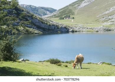 Lake og high mountain.