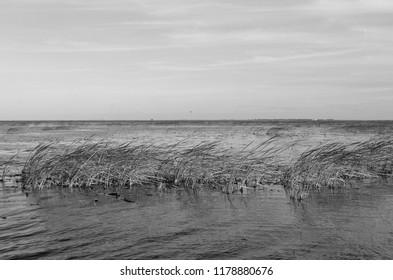 lake okeechobee Florida in black and white