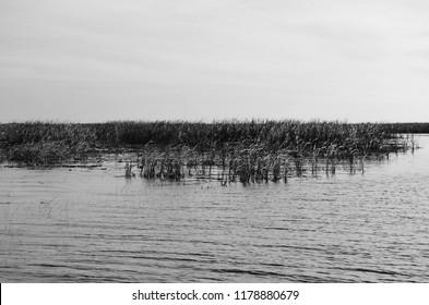 lake okeechobee Florida tall grass in black and white