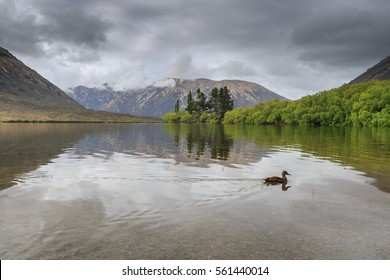 Lake Pearson with Duck