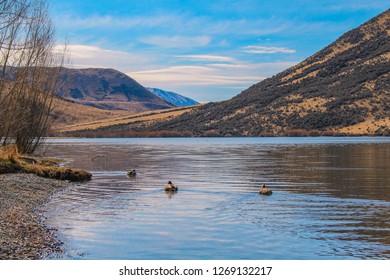 Lake Pearson / Moana Rua Wildlife Refuge, South Island, New Zealand