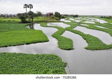 Lake in Phnom Penh, Cambodia