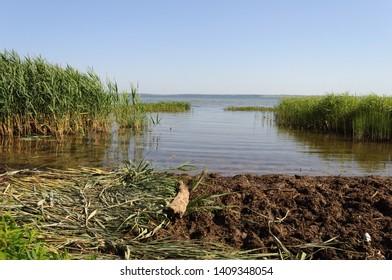 Lake Pleshcheyevo with thickets of reeds near the Pereslavl Zalessky, Russia