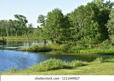 Lake Or Pond Shore And Trees