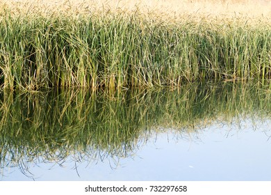 lake in the reeds autumn