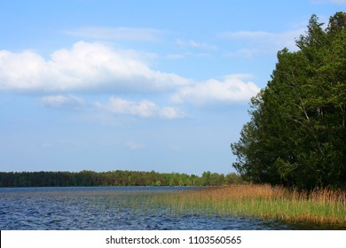 Lake and reeds in the foreground and forest in the back in summer day