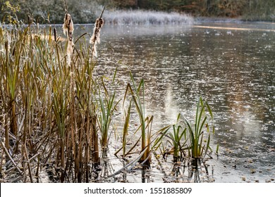 lake with reeds and hoarfrost in autumn in overcast sky, Germany