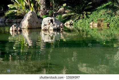 Lake reflex. Palm garden in Alicante, Spain.
