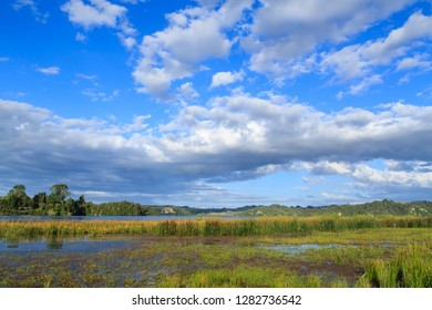 Lake Rotoma in the Rotorua Lakes Area, New Zealand. Wetland Plants Growing on the Lake's Fringe, With a Beautiful Cloudscape Above
