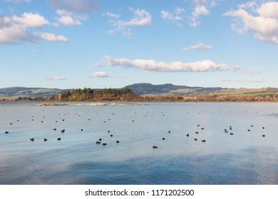 lake Rotorua with flock of resting waterbirds, Rotorua, New Zealand