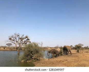 Lake Savana Africa Wildlife