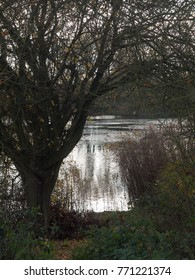 lake scene in distance through tree and shrubs; essex; england; uk
