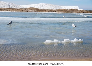 Lake shore on spring day with ice and snow in water, blue sky in the background, driftwood in foreground ans sea gulls