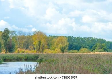 Lake shoreline below a blue cloudy sky in summer