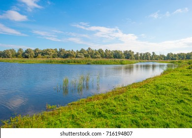 Lake shoreline in sunlight in summer