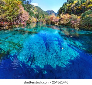 Lake with submerged tree trunks. Jiuzhaigou Valley was recognize by UNESCO as a World Heritage Site and a World Biosphere Reserve - China